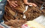 Скрутить сигару из листа табака