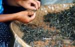 Как сделать сигарету из чая