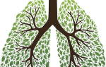 Что выводит никотин из легких