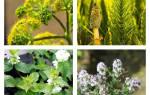 Травы вызывающие отвращение к курению